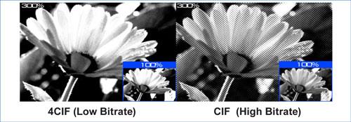 4CIF (Low Birate), CIF (High Birate)